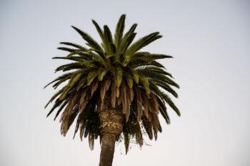 La Palm by Rick Ryan